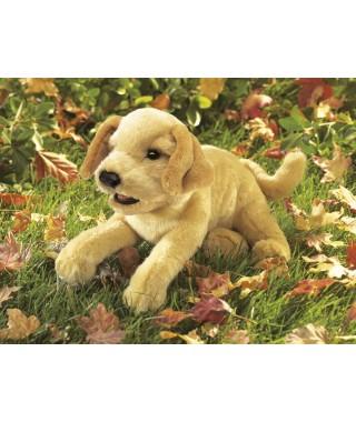 Perro Labrador marrón