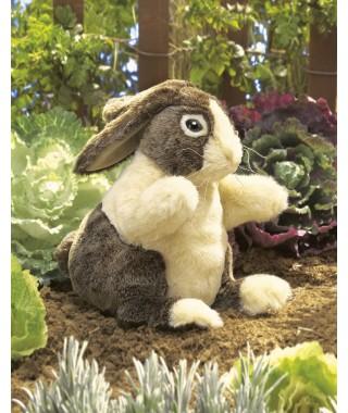 Conejo Holandes